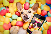 happy easter dog with eggs selfie