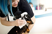 Groomer washing small dog in pet salon