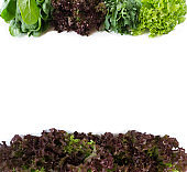 Top view. Lettuce, spinach, arugula at border of image with copy space for text. Lettuce on white background. 'nGreen vegetables on white background.