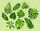 tropical plants collection in greens