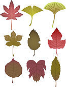 Realistic Autumn leaves set