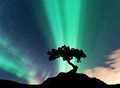 Aurora borealis and silhouette of a tree on the mountain
