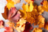 The Autumn background with yellow leaves