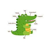 Illustration of crocodile vocabulary part of body