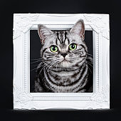 Excellent black silver tabby blotched green eyed British Shorthair kitten sitting through white photo frame, looking at camera. Isolated on black background.