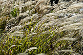 close up reeds at windy air in nature