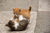 playing game little kitten on floor