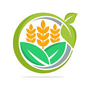 icon illustration with concept of business management and development of food commodities, especially for wheat, organic rice