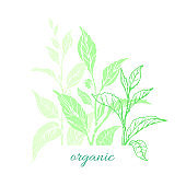 Vector nature card of tea tree, bush, leaves