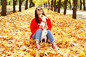 Funny jack russell terrier dog in autumn park.