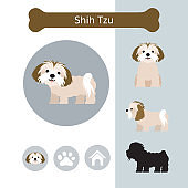 Shih Tzu Dog Breed Infographic