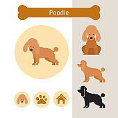 Poodle Dog Breed Infographic