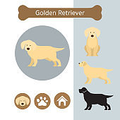 Golden Retriever Dog Breed Infographic
