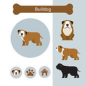 Bulldog Dog Breed Infographic