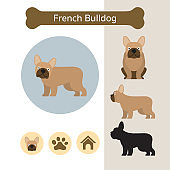 French Bulldog Dog Breed Infographic