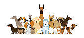 Group of Dog Breeds Illustration