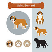 Saint Bernard Dog Breed Infographic