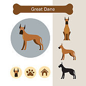 Great Dane Dog Breed Infographic