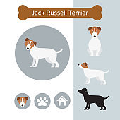 Jack Russell Dog Breed Infographic