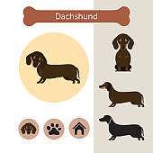 Dachshund Dog Breed Infographic
