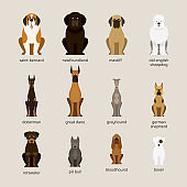 Dog Breeds Set, Giant and Large Size