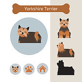 Yorkshire Terrier Dog Breed Infographic