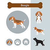 Beagle Dog Breed Infographic