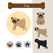 Pug Dog Breed Infographic