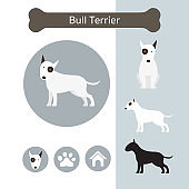 Bull Terrier Dog Breed Infographic