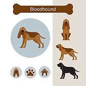 Bloodhound Dog Breed Infographic