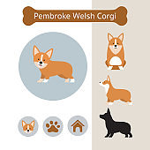 Pembroke Welsh Corgi Dog Breed Infographic