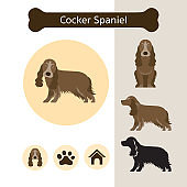Cocker Spaniel Dog Breed Infographic
