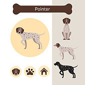 Pointer Dog Breed Infographic