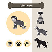 Schnauzer Dog Breed Infographic