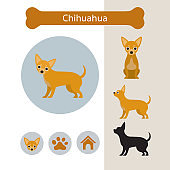 Chihuahua Dog Breed Infographic