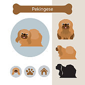 Pekingese Dog Breed Infographic