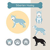 Siberian Husky Dog Breed Infographic