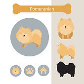 Pomeranian Dog Breed Infographic