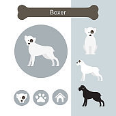 Boxer Dog Breed Infographic