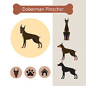 Doberman Pinscher Dog Breed Infographic