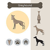Greyhound Dog Breed Infographic