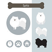 Spitz Dog Breed Infographic