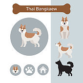 Thai Bangkaew Dog Breed Infographic
