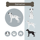 Dalmatian Dog Breed Infographic