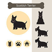 Scottish Terrier Dog Breed Infographic