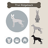 Thai Ridgeback Dog Breed Infographic