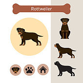 Rottweiler Dog Breed Infographic