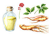 Ginseng tincture set. Watercolor hand drawn illustration isolated on white background