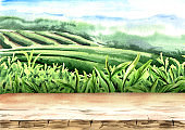 Wood floor on tea plantation. Hand drawn watercolor illustration. Tea background