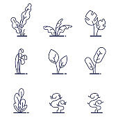Set of different forest ferns. Flat outline vector illustration. White isolated.